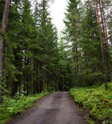 Bosque carretera