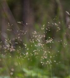 Bosque hierba 2