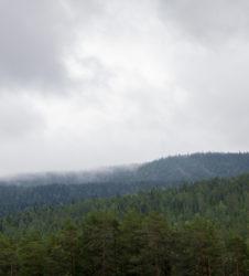 Bosque paisaje 4