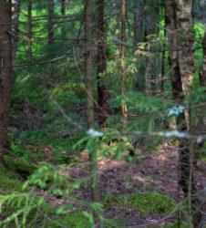 Bosque ramas