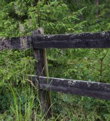 Bosque valla 1