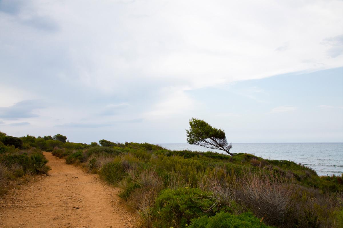 sierra irta camino con arbol junto al mar