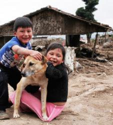 Unicef Stan perro