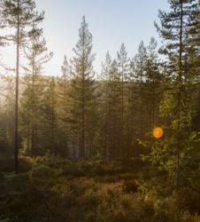 Bosque luz sol