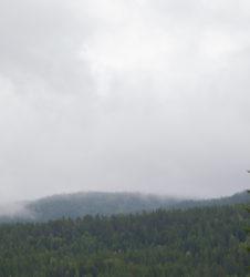 Bosque paisaje