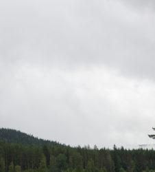 Bosque paisaje 2