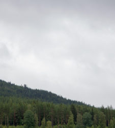 Bosque paisaje 3