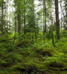 Bosque salvaje