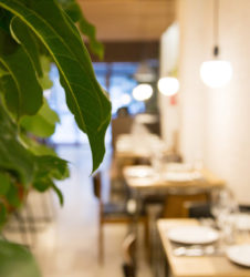 Plantas decoracion restaurantes