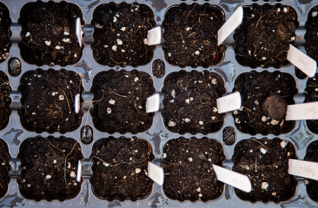 semilleros cultivo huerto urbano