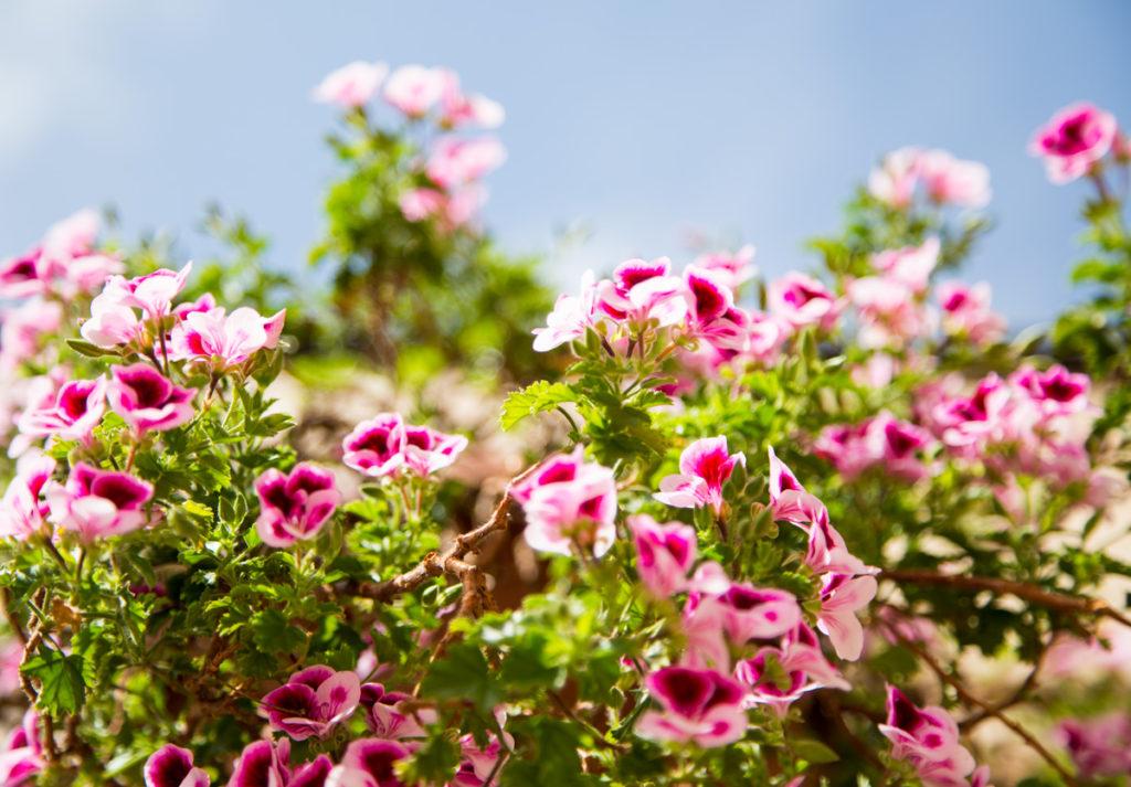 flores clasicas terraza